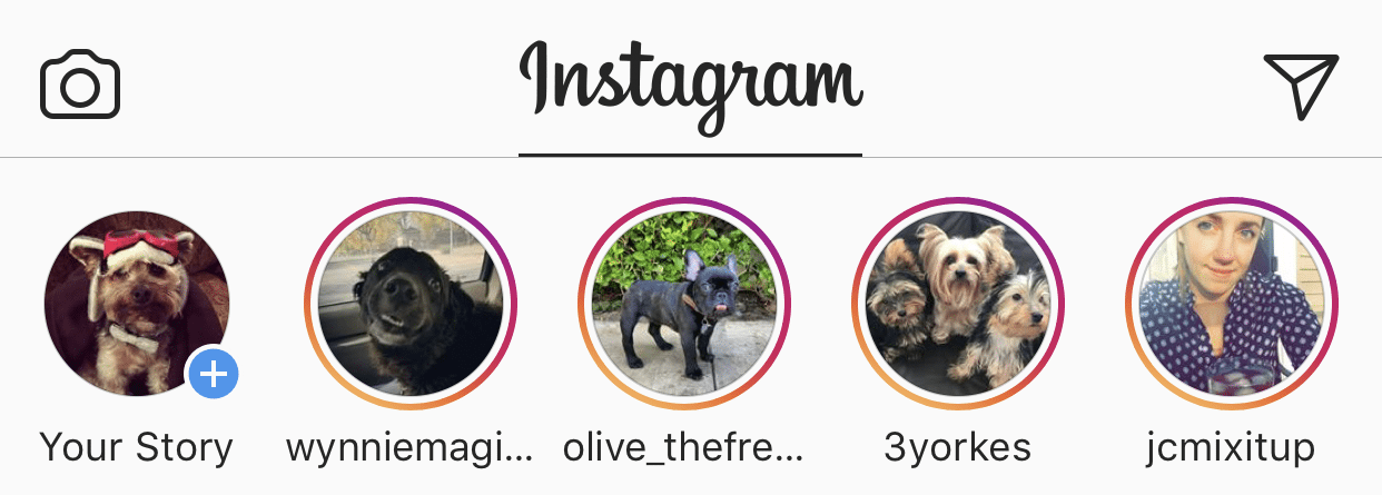 Tell Your Story with Instagram Stories - Aspen Grove Marketing