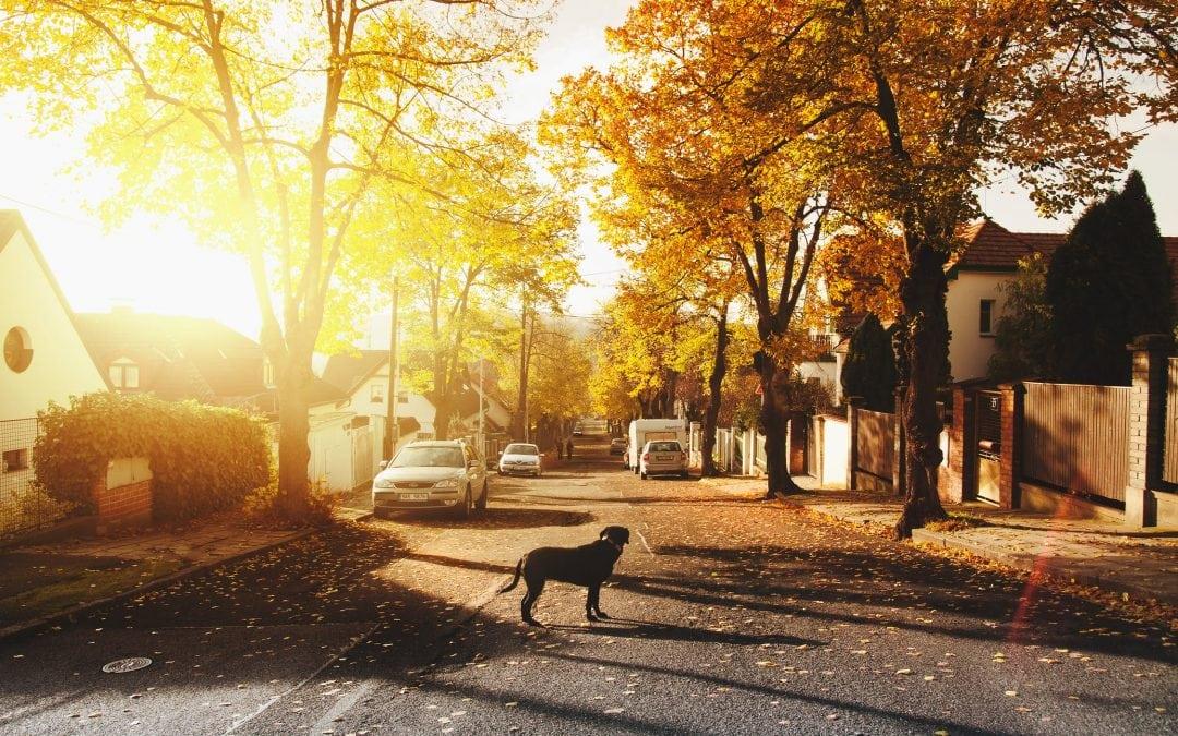 Nextdoor Part 3 | Five Tips on How to Use Nextdoor for Business Efficiently